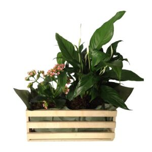 Mixed Plants In Box (Subject to availability)